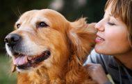 معرفی فیلم ماجراجویی یک سگ ۲۰۱۹ (A Dog's Purpose)