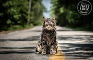 تصاویر فیلم ترسناک قبرستان حیوانات خانگی استیون کینگ