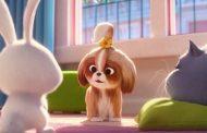 دومین تریلر انیمیشن ۲ The Secret Life of Pets با محوریت شخصیت دیزی