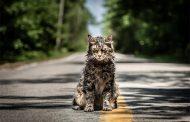 قبرستان حیوانات خانگی + ویدیو جدید فیلم ترسناک استیون کینگ