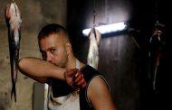 تحلیل فیلم روسی امیر حسین ثقفی