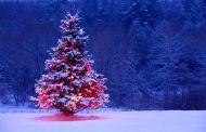 تصاویر کریسمس ۲۰۲۰ در تهران