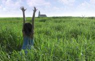 نقد بررسی فیلم ترسناک در علفزارهای بلند (In The Tall Grass)